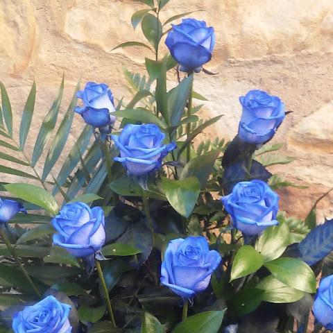 Azules.jpg
