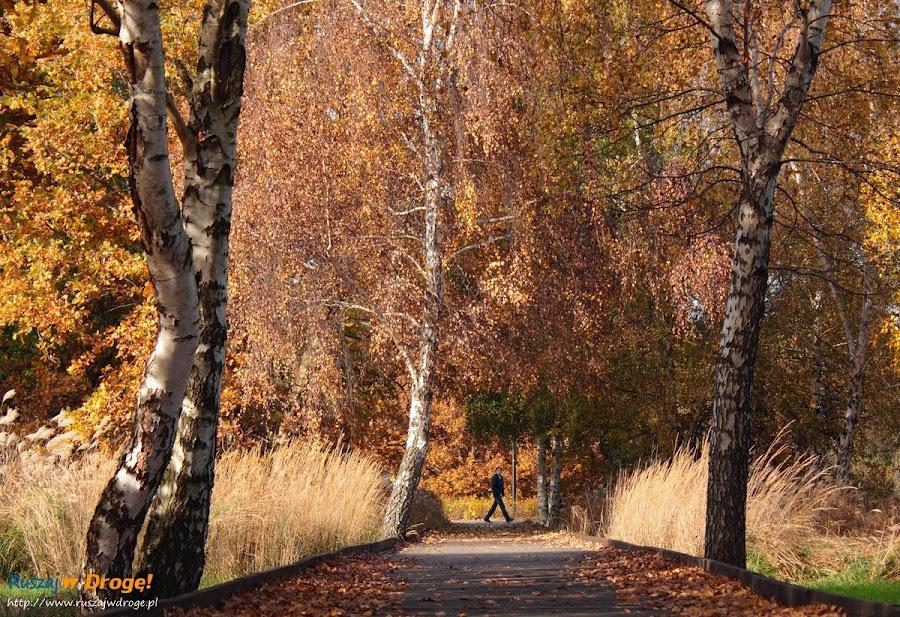 Park Reagana w Gdańsku - jesienne spacery