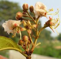 https://lh3.googleusercontent.com/-DQZ66vVUelg/VSaHcdfpsLI/AAAAAAAAAZ4/g4nZTOwC6b8/s1600/GE-Tree2-OCT-flowers2.JPG
