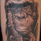 pt00626-chimp.jpg