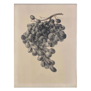 Signed Grapes Lithograph
