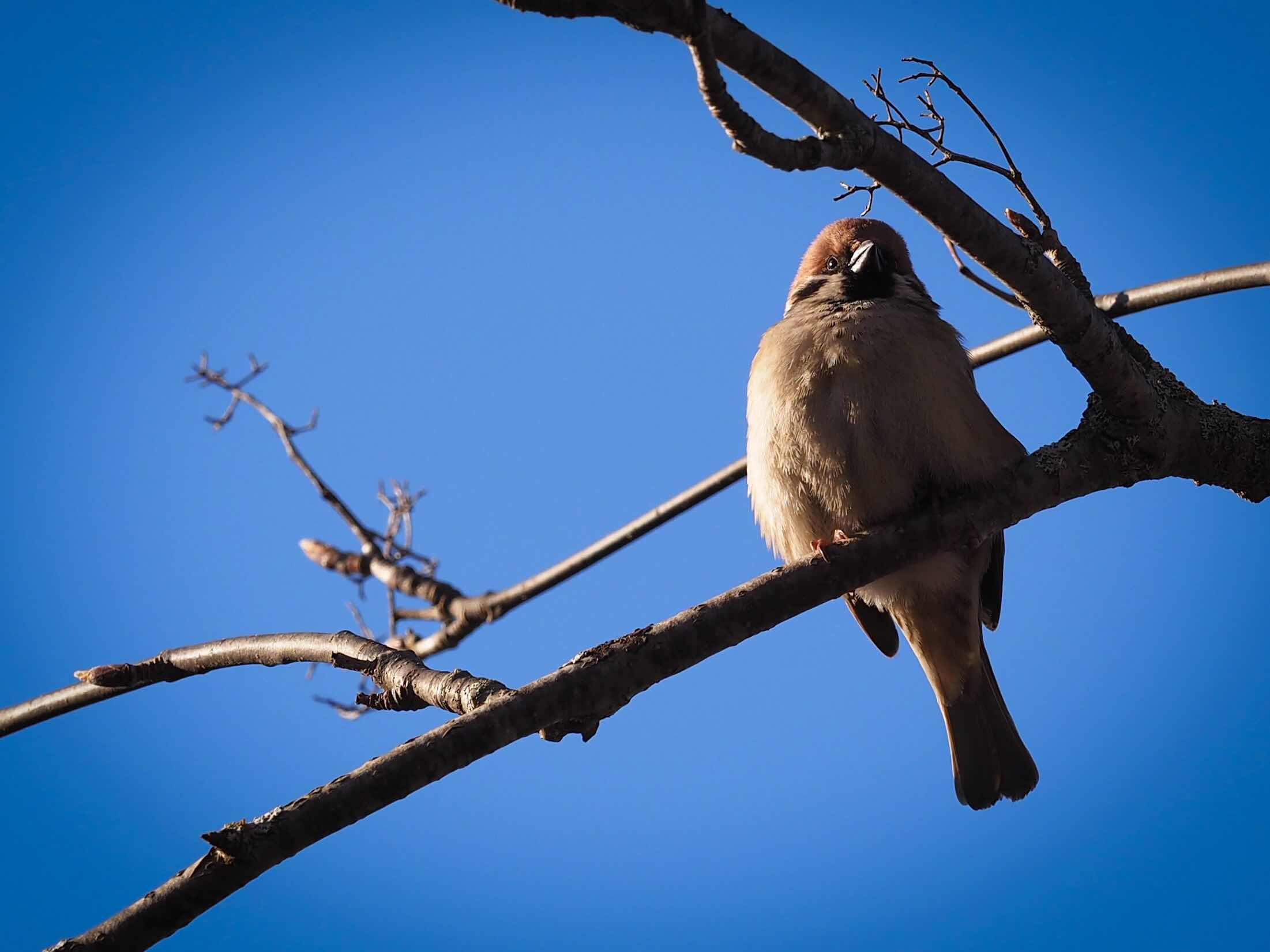 Yksi täällä ottamistani lintukuvista näytille