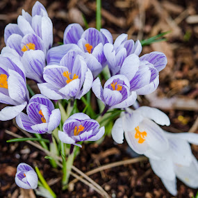 Bunch by Scott Hemenway - Nature Up Close Flowers - 2011-2013 ( plant, purple, iso 100, green, bloom, spring, bokeh, nikon d7000, flowers & plants, nature, f 2.8, outdoor, 200mm, nikon 70-200 2.8 vrii, flower )