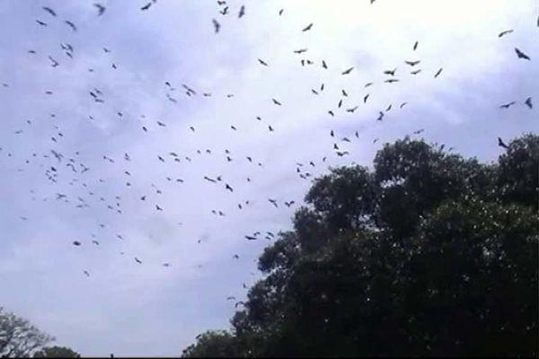 ஒவ்வொரு வீட்டிலும் 100 பறவைகள்; அந்த ஊரே ஒரு சரணாலயம்: