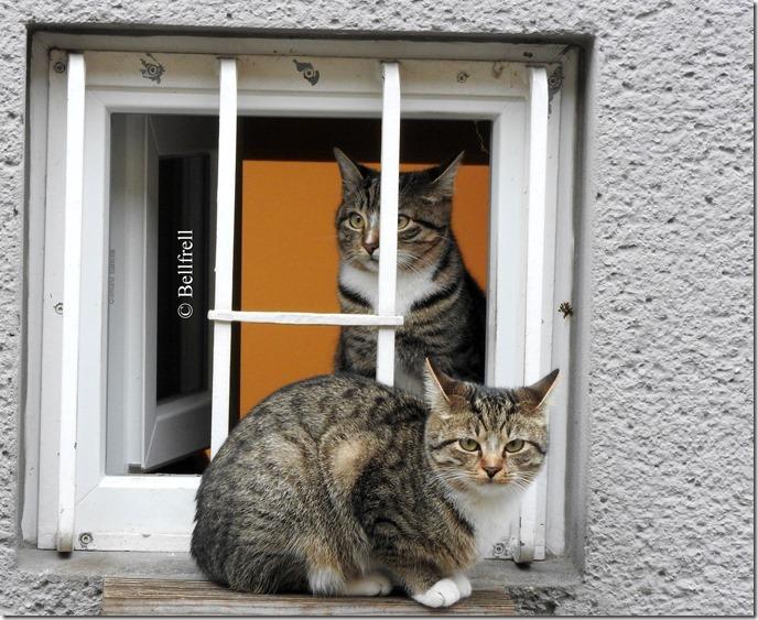 Katzen am Fenster 5-001