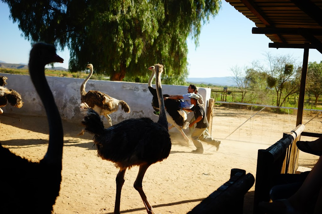 high gate ostrich farm
