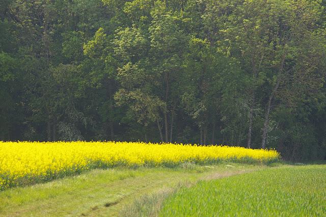 Hautes-Lisières (Rouvres, 28), 24 avril 2011. Photo : J.-M. Gayman