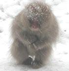 ニホンザル 僕の一番好きな写真。 サルはホンとに人に似ている。しぐさもそうだ。