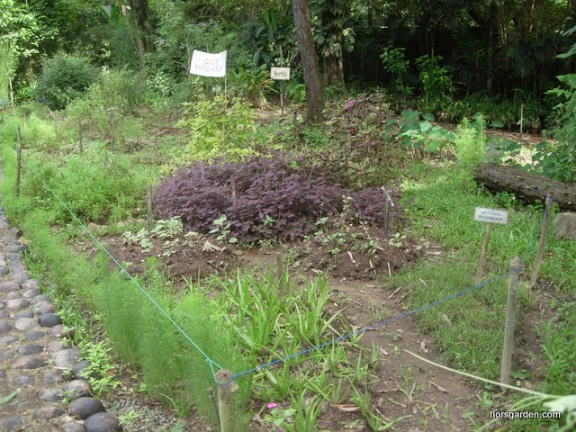Botika Garden