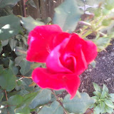 Gardening 2014 - 0409175409.jpg