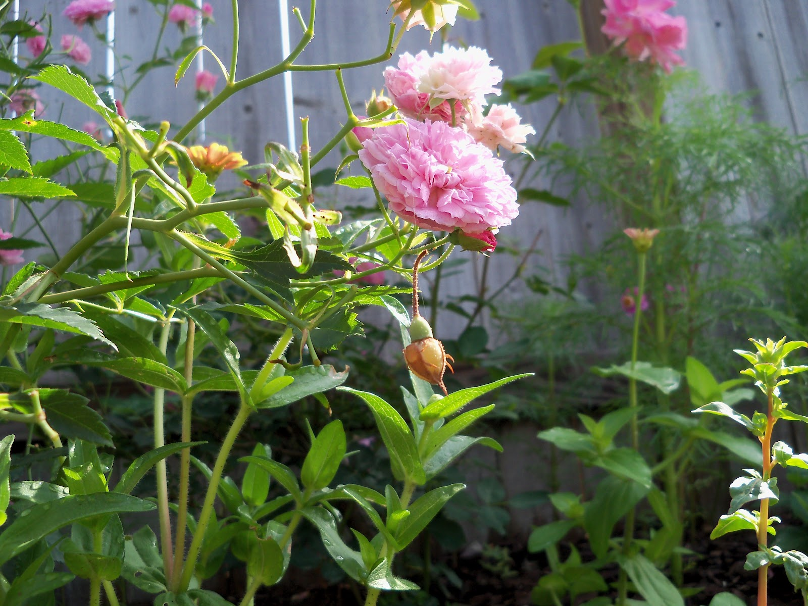 Gardening 2010, Part Two - 101_2389.JPG