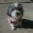 ibou82 avatar image