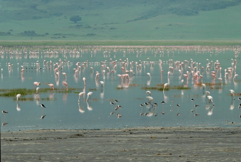 lake-magadi-7