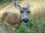 Unlike Dave I make friends with the deer I meet