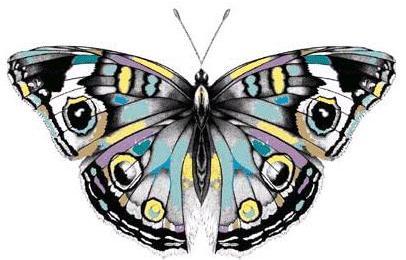Mariposa de varios colores