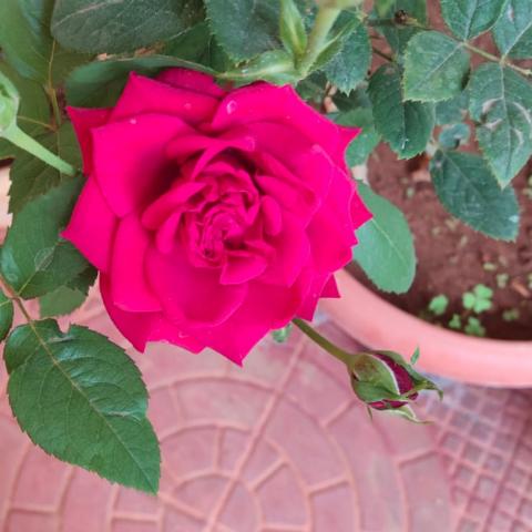 Vineeta Rao