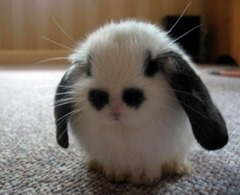 Cute-animals-5 (2)