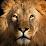 August Williams's profile photo