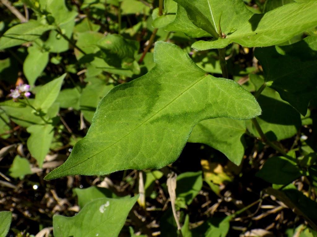 葉の様子2