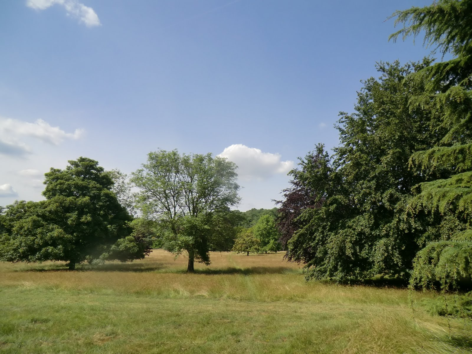 CIMG2382 Parkland, Thurnham