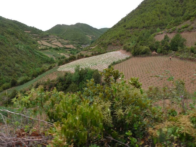 Chine . Yunnan.SHA XI 2 et retour à Lijiang - P1250301.JPG