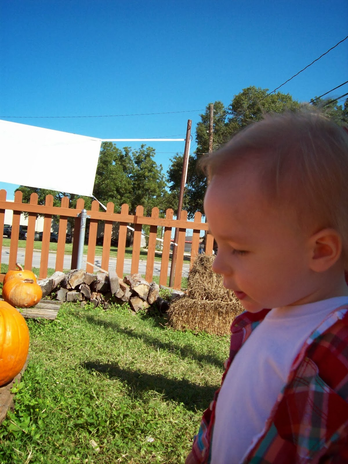 Pumpkin Patch - 114_6563.JPG