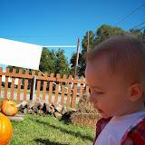 Pumpkin Patch - 114_6563.JPG