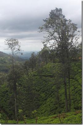 Елла Шрі-Ланка