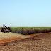 Governo lança plano de promoção da agricultura de baixo carbono