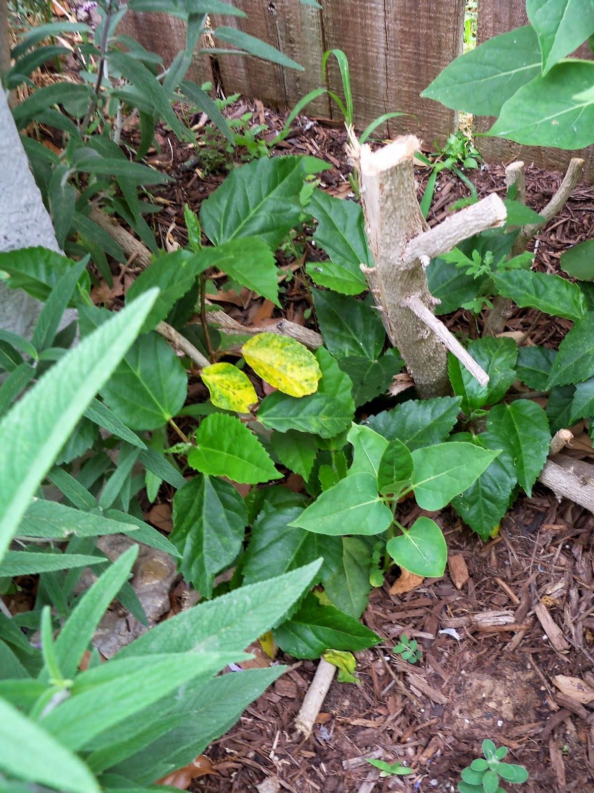 Gardening 2014 - 116_1748.JPG