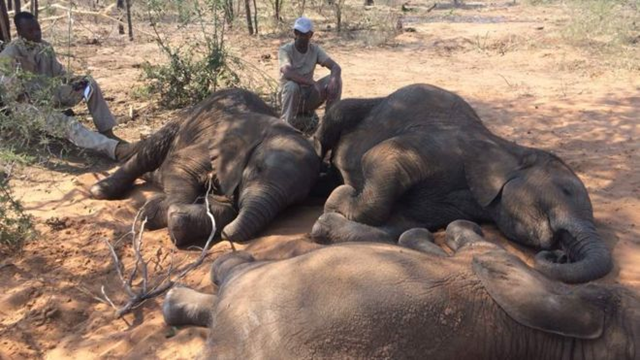 Carcases of nearly 90 elephants were found near the Okavango Delta wildlife sanctuary in Botswana, in in August 2018. Photo: Elephants Without Borders