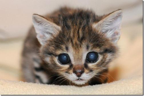 fotos de gatos (26)
