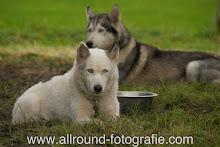 Huisdierreportage Hondendag Uden Dierendag (4 oktober 2008) - 02