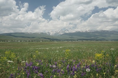 Blumenwiesen östlich des Aragaz