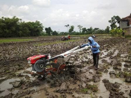 Berita foto terbaru terkait traktor tangan bantuan presiden Jokowi (Joko Widodo)di desa keras wetan
