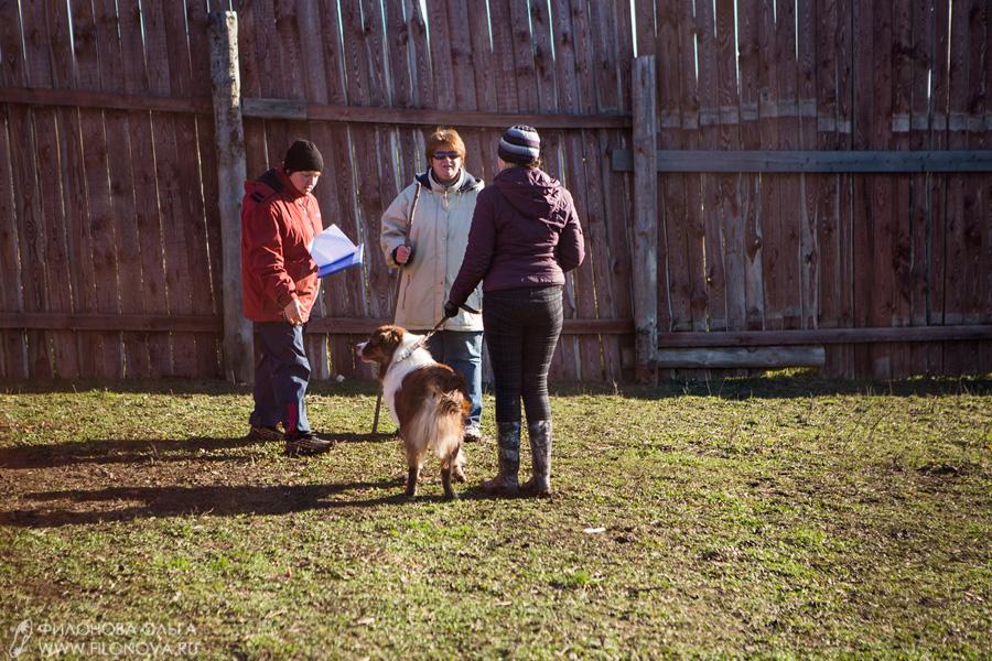 Тест на наличие пастушьего инстинкта - Страница 17 12-10-27-filonovaoawed-12-19-44-00