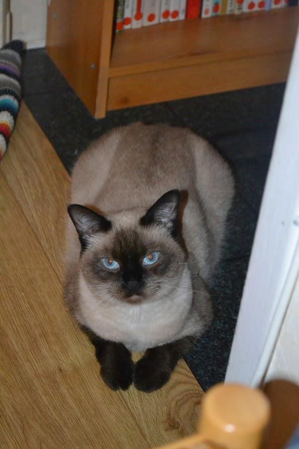 Photos des chats sauvés, avant/après - Page 7 DSC_4099
