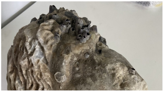Πρέβεζα – Ανασύρθηκε από τη θάλασσα κεφαλή αγάλματος