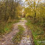 Дорога из опавших листьев