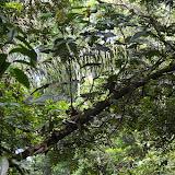 Bagne des Annamites, Montsinéry (Guyane), 3 décembre 2011. Photo : J.-M. Gayman