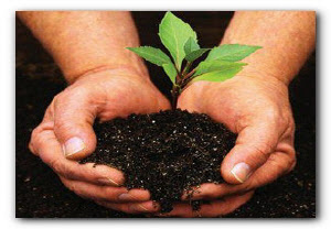 идеальная почва для рассады