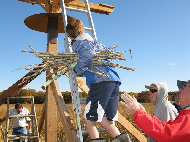 Guilford Salt Meadow Sanctuary Osprey Platform - sfs%252C10-25-09%2Bosprey%2Bplatform%2Binstall%252C099.JPG