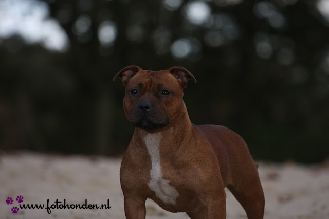 Shes The One of Red Passion (Trijntje) - IMG_3544.JPG