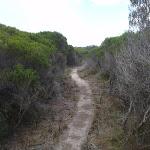 Track through thick heath (105514)