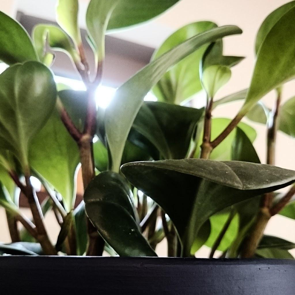 観葉植物-種類