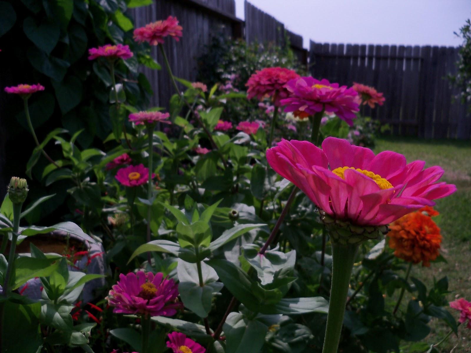 Gardening 2011 - 100_8639.JPG