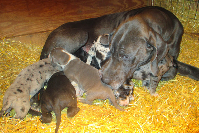 Saffy & her babies @ 3 weeks
