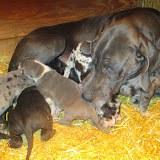 Saffy & her babies @ 3 weeks