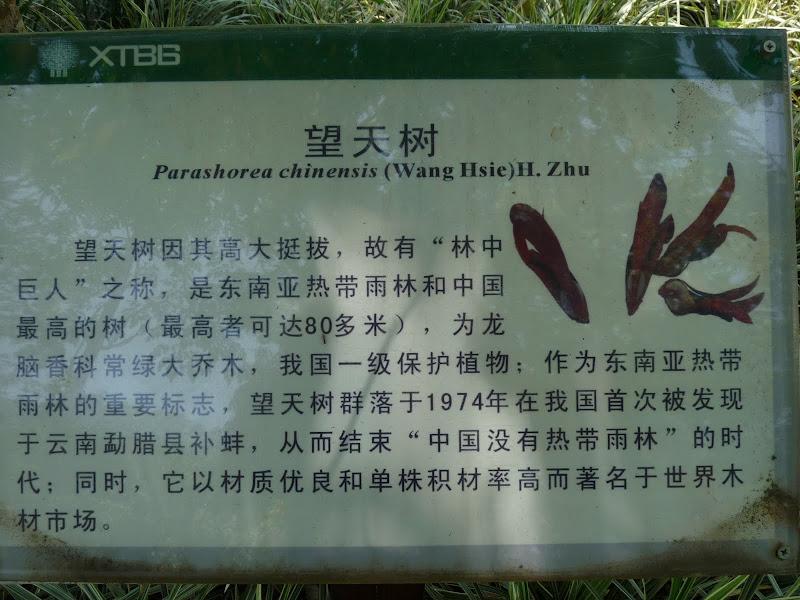 Chine .Yunnan . Lac au sud de Kunming ,Jinghong xishangbanna,+ grand jardin botanique, de Chine +j - Picture1%2B563.jpg