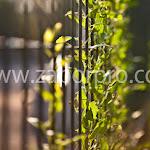 Ограждение забор (19).jpg